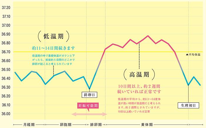 違い の 体温 と 基礎 体温